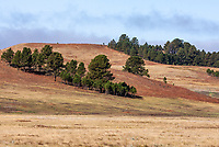 The rolling hills of Wind Cave National Park are a mixture of prairie grasslands and ponderosa pine forests.   South Dakota.