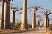 An old loaded car drives through Avenue of the Baobabs, near Morondava, Madagascar