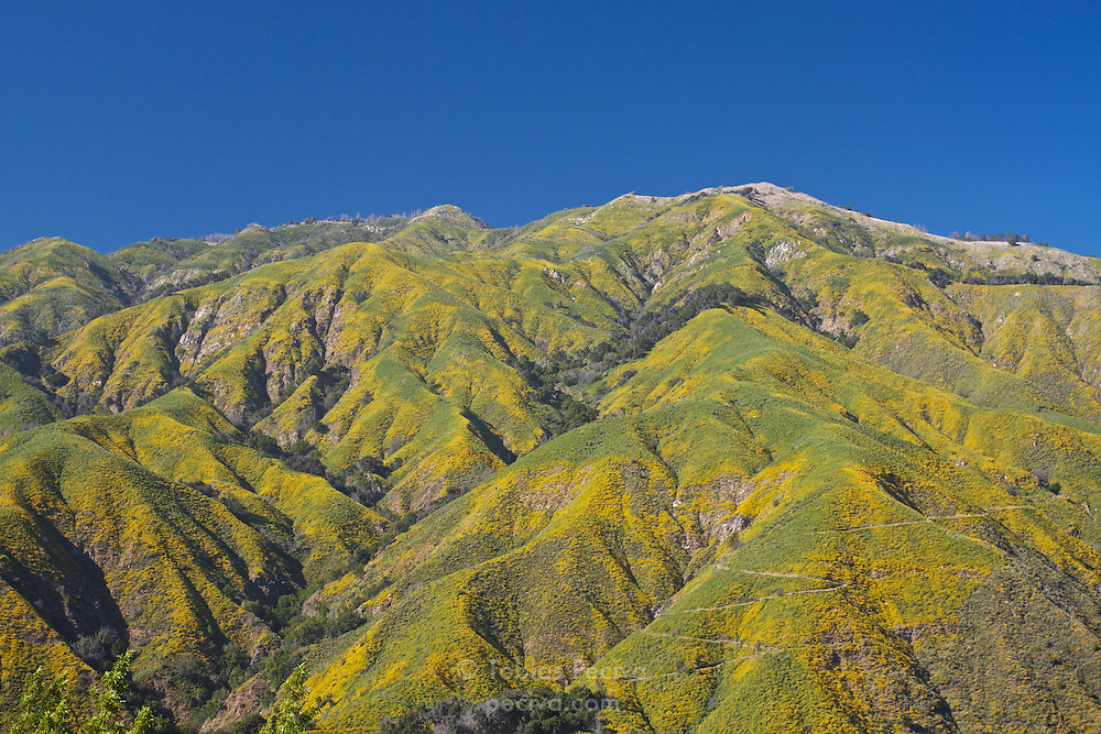 Green and yellow hills against a clear blue sky in Big Sur, California.