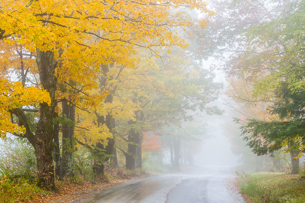 Country road, autumn trees and fog, Cheshire County, New Hampshire, USA