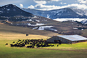 Working cattle ranch in central Montana.