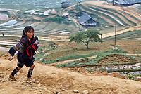 Vietnam. haut Tonkin. Region de Sapa. Rizières. Groupe ethnic Hmong Noir. // Vietnam. North Vietnam. Sapa area. Rice fields. Black Hmong ethnic group.