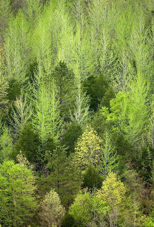 The green of spring, Buffalo National River, Arkansas