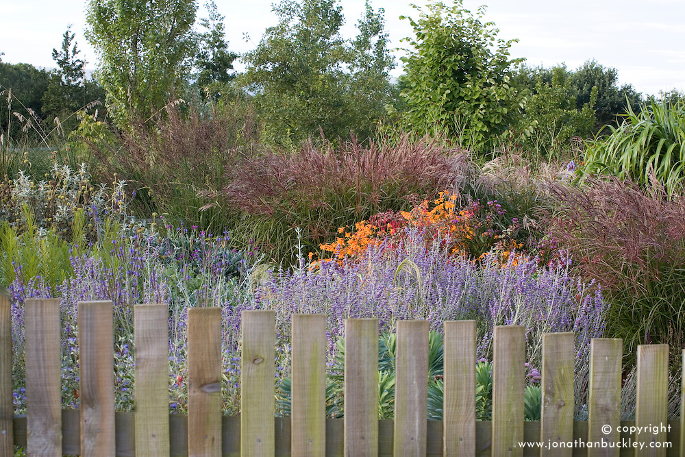 Wooden fence at Marchants Nursery with autumn borders of perovskia, miscanthus and crocosmia beyond