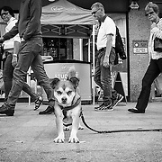 Street photography courses and workshops in London and throughout the UK, www.streetsnappers.com