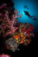 Thailand's beaches and diving are among the finest in Asia.