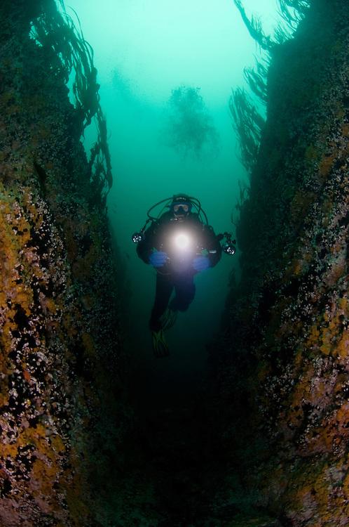 Drifting fast in the crack, Sundströmmen, Klas Malmberg.Atlantic marine life, Bodö, Norway.Model release by photographer
