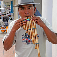 South America, Ecuador, San Anotnio de Ibarra.  A local Ecuadorian plays the panflute, a traditional instrument of the Andes.