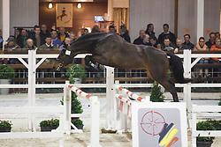 065 - Bachelor JVH<br /> Hengstenkeuring BWP - Azelhof - Koningshooikt 2015<br /> ©  Dirk Caremans