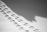 Ski tracks in the Wallowa Mountain backcountry.  Eagle Cap Wilderness Area, Oregon.