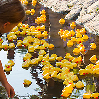 Child watches a thousand rubber ducks float on a creek during a charity race of the Rotary Club in Szentendre (about 20 km North of the capital city Budapest), Hungary on August 31, 2013. ATTILA VOLGYI