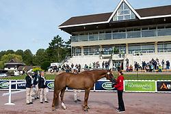 Britta Napel, (GER), Let s Dance 89 - Horse Inspection - Alltech FEI World Equestrian Games™ 2014 - Normandy, France.<br /> © Hippo Foto Team - Jon Stroud<br /> 25/06/14