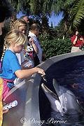 children feed captive bottlenose dolphins, Tursiops truncatus, in shallow petting pool at Sea World, Orlando, Florida