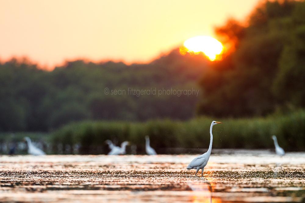 Lemon Lake, Great Trinity Forest near Trinity River, Dallas, Texas, USA.