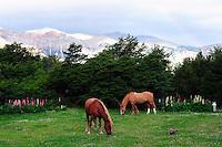 Rainbow and Horses at Hosteria El Pilar