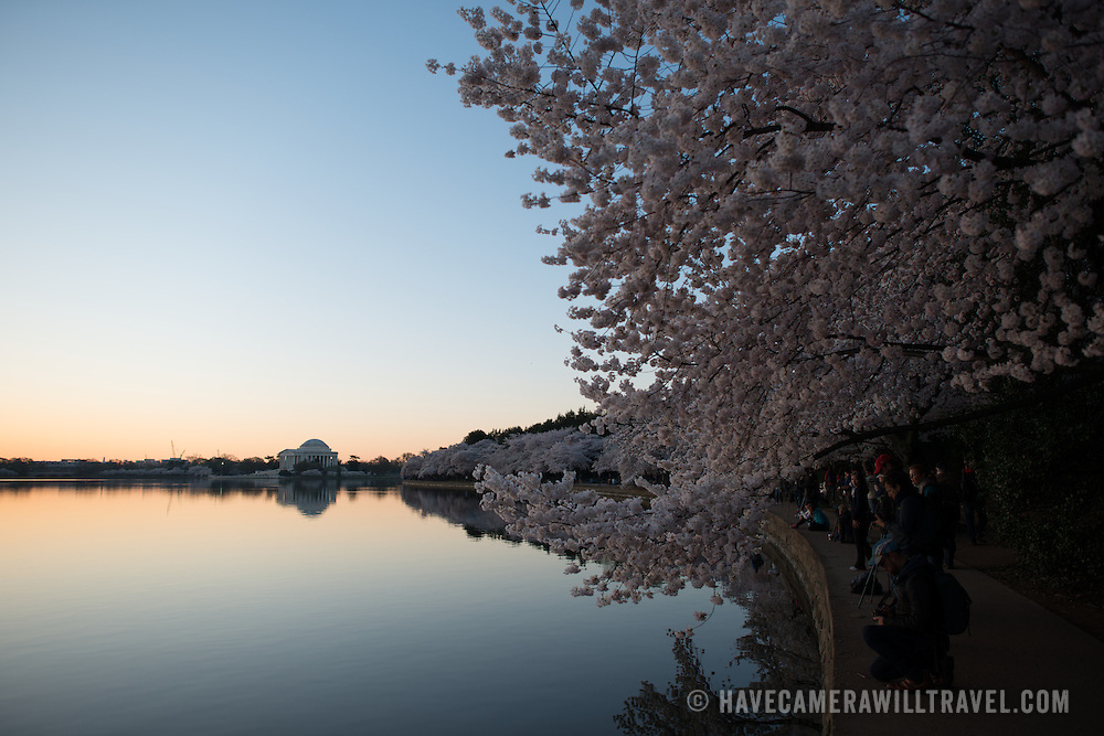 People line up along the waterfront of the still waters of the Tidal Basin before dawn during the blooming of the famous cherry blossoms in Washington DC. The Jefferson Memorial is in the background.