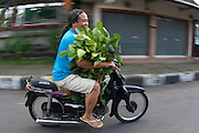 A resident of Bali transports vegetables on his moped.