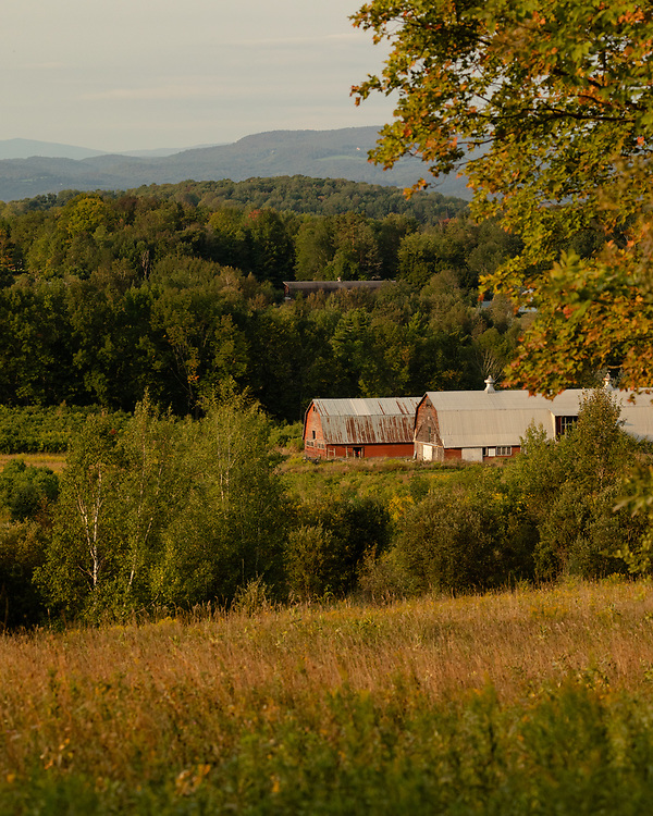 Two old red barns shining in early morning sunlight within the hills of Central Vermont.