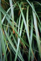 Closeup of blades of ornamental grass