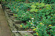 65021-03115 Shade garden with hostas, impatiens, path and gazebo, St Louis  MO