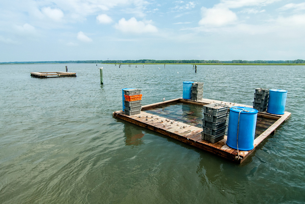 A natural refridgerator for keeping oysters during Daisey's Island Cruises two-hour tour of Chincoteague, Assateague, and Wallops Islands in Chincoteague Island, VA on Thursday, July 28, 2016. Copyright 2016 Jason Barnette