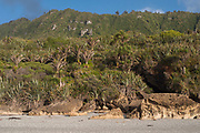 A collapsed, overgrown, limestone cave and overhang, against the backdrop of lush Nikau and Flax dominated coastal vegetation of the Paparoa Ranges, West Coast, New Zealand, at sunset.