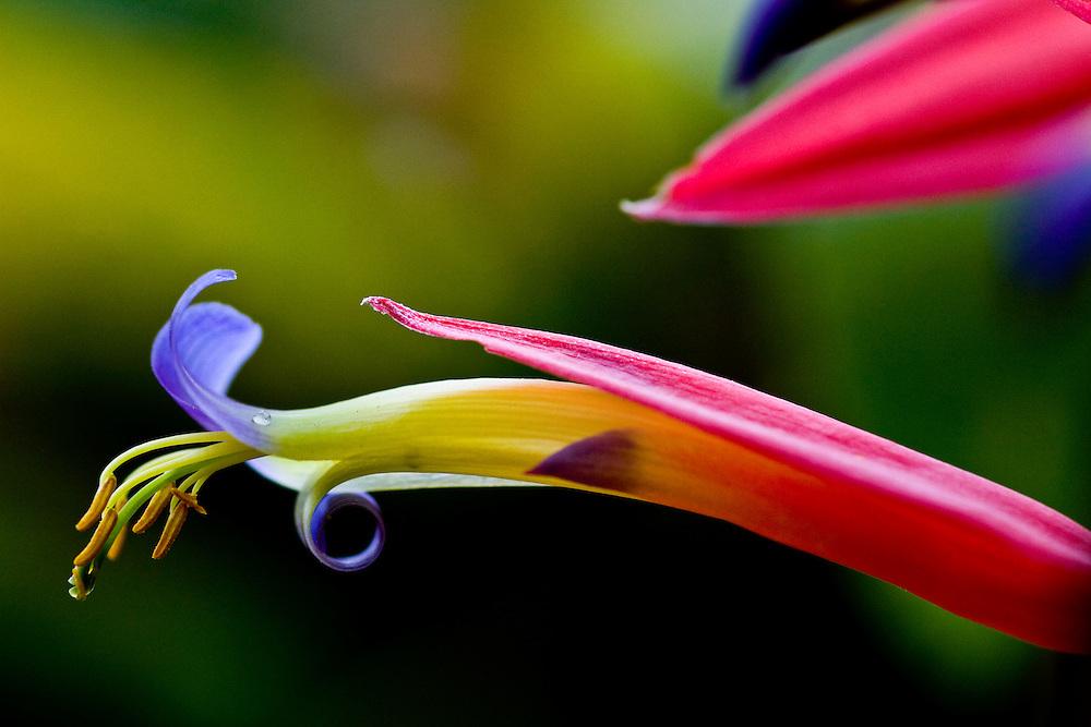 Ipaba_MG, Brasil...Reserva Particular do Patrimonio Natural (RPPN) fazenda Macedonia. Na foto uma flor...The Private Reserve of Natural Heritage (RPPN), Macedonia farm. In this photo a flower...Foto: JOAO MARCOS ROSA /  NITRO