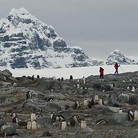Tourists explore a Gentoo Penguin rookery near Damoy Point on Wiencke Island, Antarctica. Behind are peaks of The Seven Sisters of Fief in the Fief Mountains.