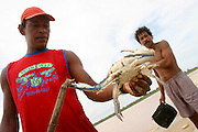 Belmonte_BA, Brasil...Pesca de Siri em Belmonte, Bahia...The crab fishing in Belmonte, Bahia...Foto: LEO DRUMOND / NITRO