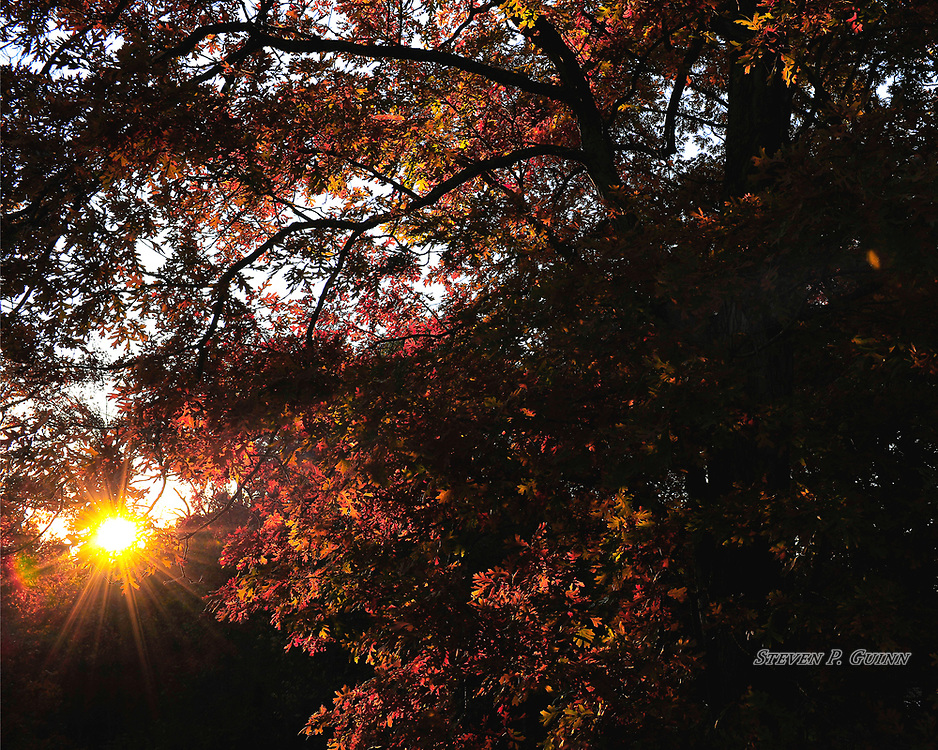"""I captured this nature portrait, along with """"Colors Of November"""", in my backyard on November 5th, 2019. This is the same scene as """"Colors Of November"""", but later that same evening during sunset. The sun shining through the trees is what caught my eye the most. I decided to """"stop down"""" (close) the aperture of my lens to create a """"sunstar"""" for dramatic effect. Another effect I wanted to capture in this image is the brightness of the setting sun contrasting with the shadows that were cast behind the tree since the colors of the leaves were not as visible due to the diminishing light.<br /> <br /> Printed on Hahnemühle German Etching paper. Limited to 150 productions per size.<br /> <br /> Framed prints are available in 20"""" x 16"""", 30"""" x 24"""", 40"""" x 30"""", and 50"""" x 40"""" sizes."""