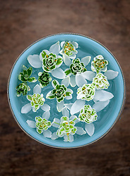 Double snowdrop flowers floating in a bowl