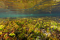 Seagrass in Seychelles