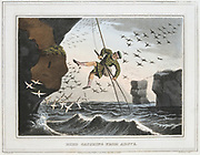 Bird Catching from Above'. Catcher was lowered down cliffs on a rope. Birds and eggs were a great economic resource for the Shetland Islanders.  Aquatint after JH Clarke from 'Foreign Field Sports', Edward Orme, (London, 1813).