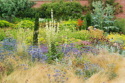 Mixed borders at Broughton Grange including Eryngium x zabelii, Allium sphaerocephalon, verbascums and euphorbias
