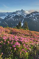 Mount Shuksan viewed from wildflower meadows of Hennegan Peak, Mount Baker Wilderness North Cascades Washington