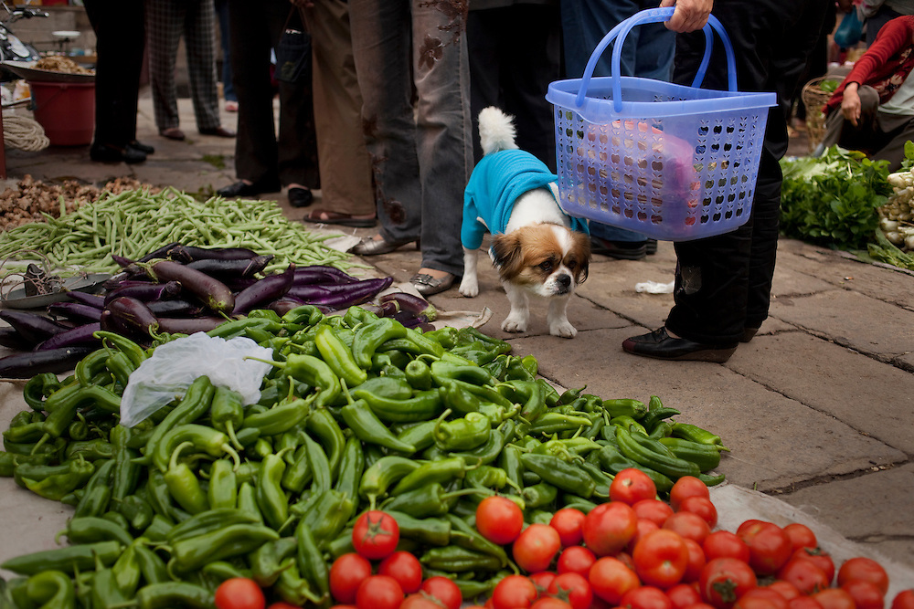 A dog in the market in Heshun town, Yunnan province, China.