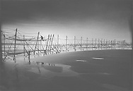 A salmon netter from Joseph Johnston & Sons of Montrose, recovering fish from a fly net (a type of stake net) on the sands at St. Cyrus, Aberdeenshire. Fishing with fly nets here was discontinued after the 1998 season.<br /> Ref. Catching the Tide 59/96/35 (13th August 1996)<br /> <br /> The once-thriving Scottish salmon netting industry fell into decline in the 1970s and 1980s when the numbers of fish caught reduced due to environmental and economic reasons. In 2016, a three-year ban was imposed by the Scottish Government on the advice of scientists to try to boost dwindling stocks which anglers and conservationists blamed on netsmen.