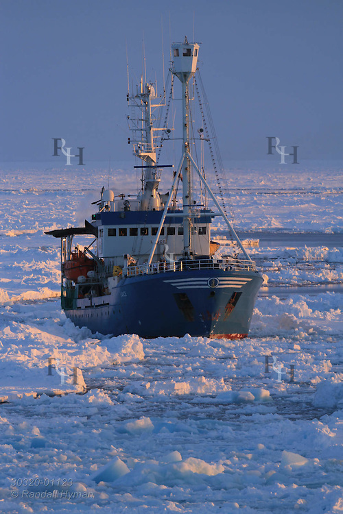 Norwegian Polar Institute's research ship, R/V Lance, sails deep into the Arctic Ocean's polar ice pack to 83° north latitude following leads cracked open by coast guard icebreaker K/V Svalbard in April 2015 far north of Svalbard, Norway.