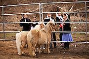 Amish girls with a miniature horse during the Annual Mud Sale to support the Fire Department  in Gordonville, PA.