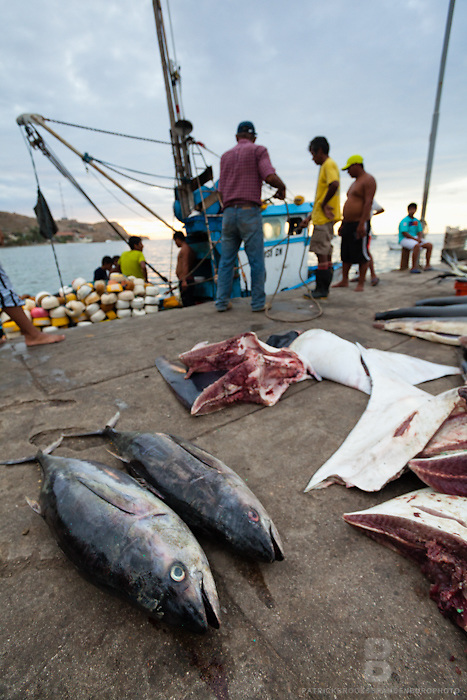 Two large dead fish surrounded by other captures from the sea just brought to the fishing pier and port of Mancora, Peru.