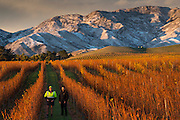 Stuart Dudley, viticulturalist, & Kevin Searles assistant vineyard manager, Villa Maria, Marlborough, New Zealand