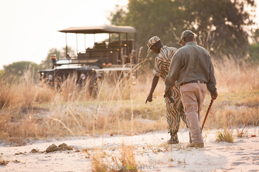 Park ranger and Safari Guide tracking on a walking safari, South Luangwa National Park. Zambia, Africa