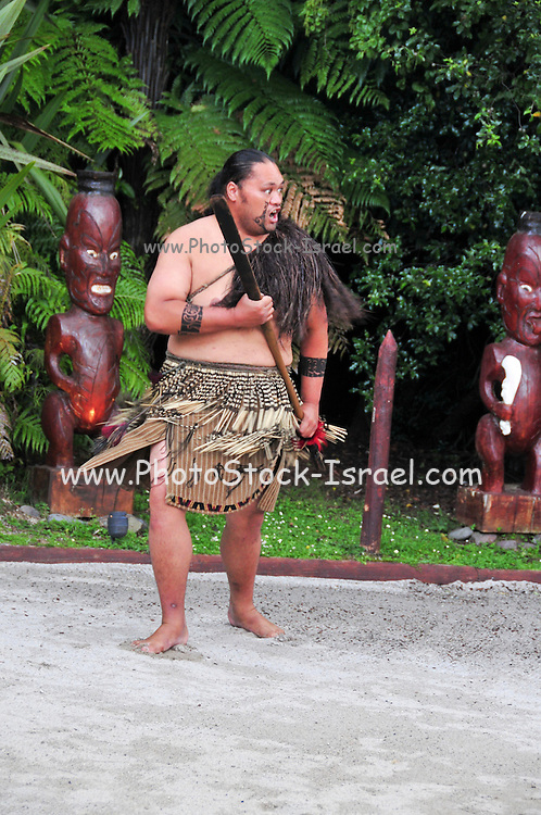 New Zealand, North Island, Rotorua, The Te Puia Geothermal Cultural Experience, Maori tribal dance