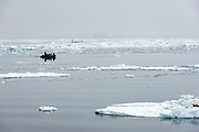 Nature photographers cruising in icy waters at Kinnes Cove, Antarctica.