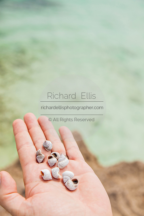 Tiny shells found along the beach in Hope Town, Elbow Cay Abacos, Bahamas.