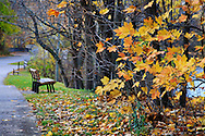 The few remaining yellow leaves and a park bench along a walking path on a wet and rainy late autumn day, Sharon Woods, Southwestern Ohio, USA