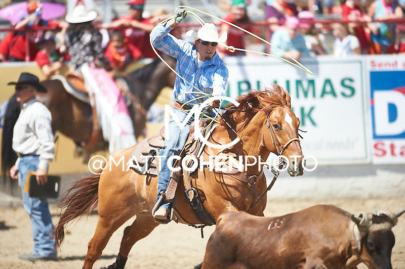 Team roper Seth Hall of Albuqerque, NM competes at the Redding Rodeo in Redding, CA.<br /> <br /> <br /> UNEDITED LOW-RES PREVIEW<br /> <br /> <br /> File shown may be an unedited low resolution version used as a proof only. All prints are 100% guaranteed for quality. Sizes 8x10+ come with a version for personal social media. I am currently not selling downloads for commercial/brand use.