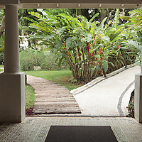 Two paths-one wooden, one stone-diverge in an exotic garden.