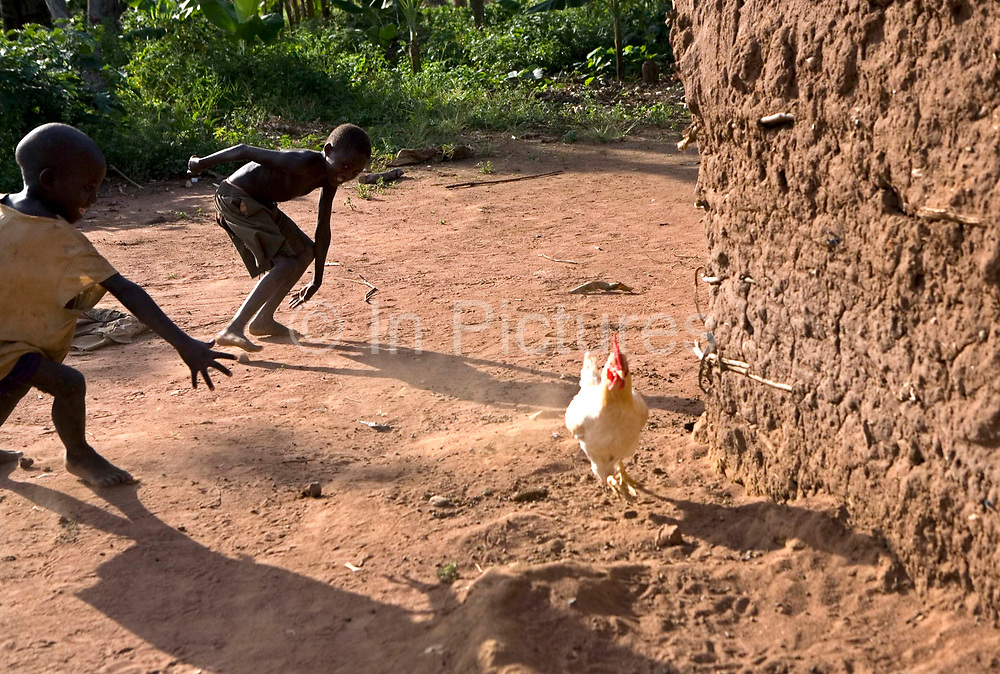 Children chasing chickens on their family farm in the Nakasongolo district of Uganda.