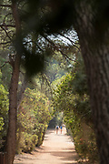 Two people taking a walk along evergreen forest sandy path